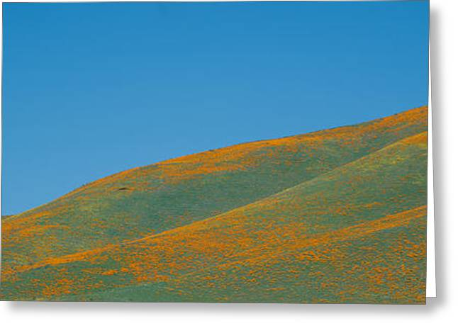 California Poppies And Wildflowers Greeting Card by Panoramic Images