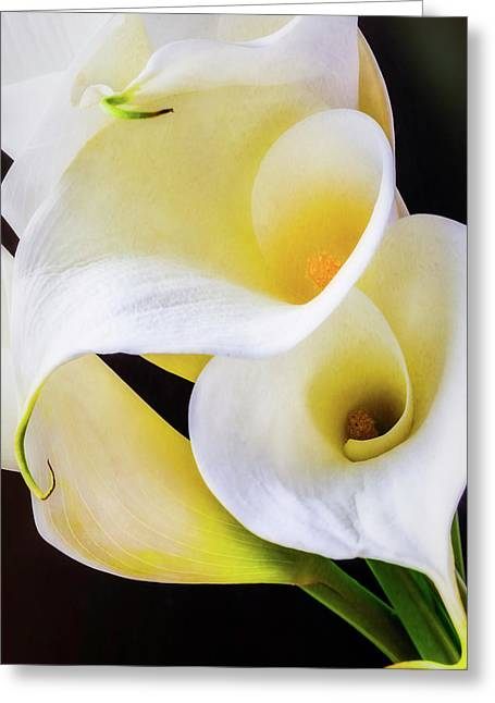 Calla Lily Beauty Greeting Card