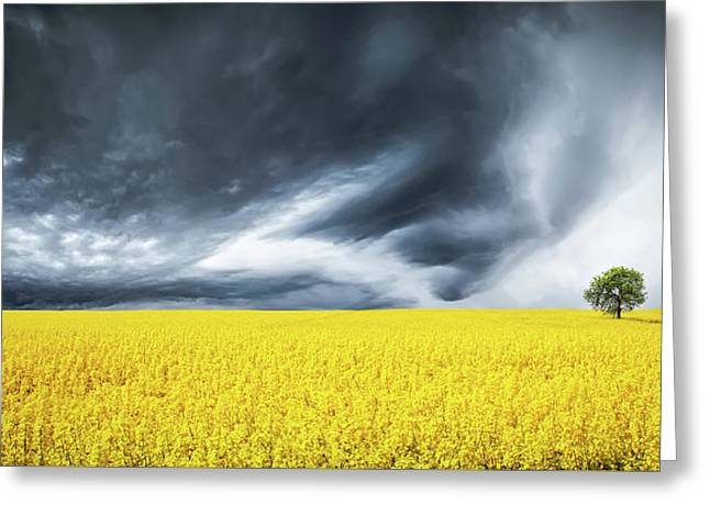 Canola Field Greeting Card by Bess Hamiti