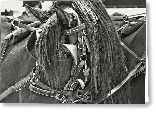 Carriage Horse Beauty Greeting Card by Dressage Design