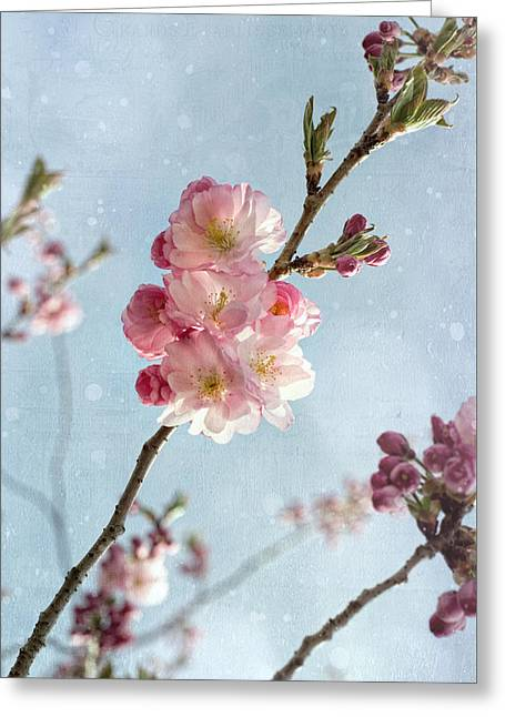 Cherrie Blossom Greeting Card by Steffen Gierok