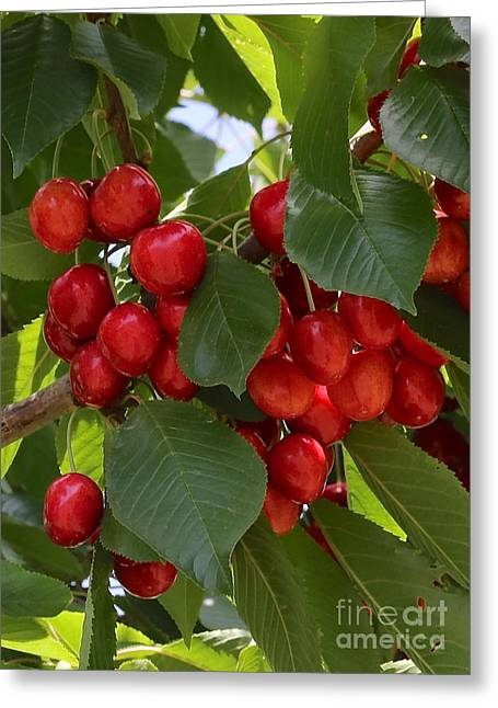 Cherries Greeting Card by Carol Groenen
