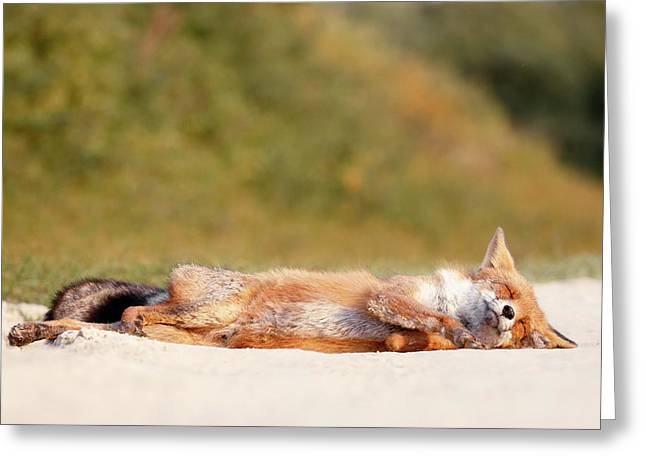 Chill Fox Greeting Card by Roeselien Raimond
