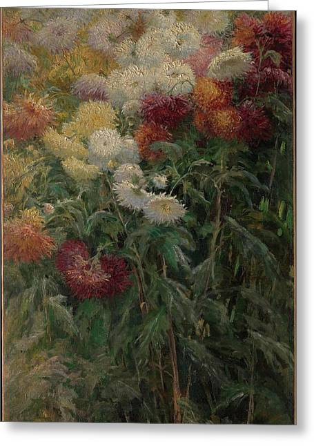 Chrysanthemums In The Garden At Petit-gennevilliers Greeting Card