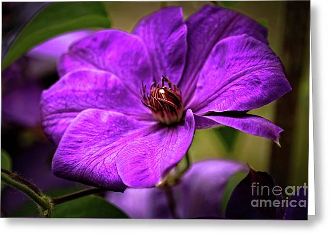 Clematis Greeting Card by Robert Bales