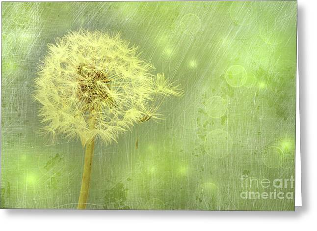 Closeup Of Dandelion With Seeds Greeting Card