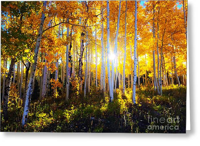 Greeting Card featuring the photograph Colorado Autumn by Kate Avery