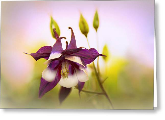 Columbine Greeting Card by Jessica Jenney