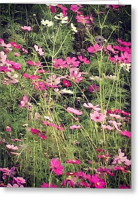 Cosmos Flowers  Greeting Card by Sobajan Tellfortunes