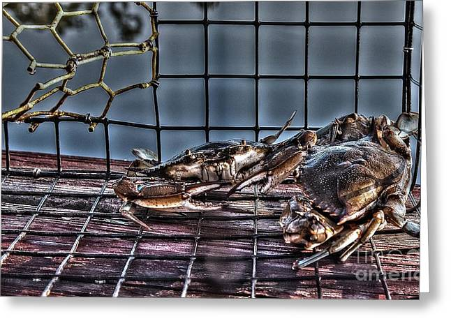 2 Crabs In Trap Greeting Card