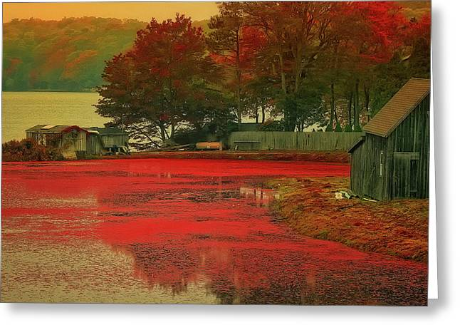Cranberry Farm Greeting Card by Gina Cormier