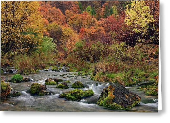 Cub River Autumn Greeting Card by Leland D Howard