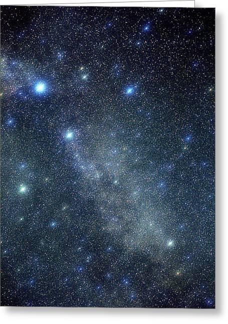 Cygnus Constellation Greeting Card by John Sanford
