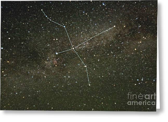 Cygnus Constellation Greeting Card by Larry Landolfi