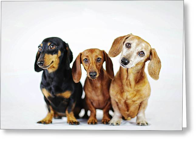 Dachshund Pack  Greeting Card by Johnny Ortez-Tibbels