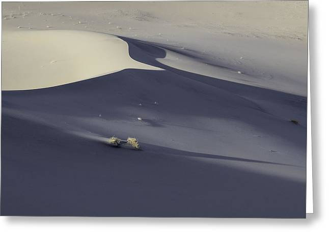 Death Valley Sand Dune At Sunset Greeting Card
