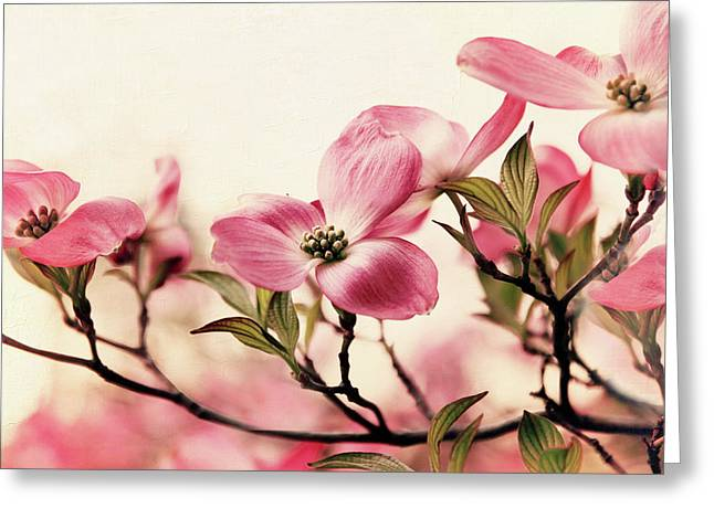 Delicate Dogwood Greeting Card by Jessica Jenney