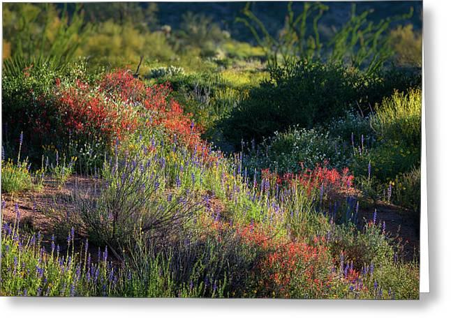 Greeting Card featuring the photograph Desert Wildflowers  by Saija Lehtonen