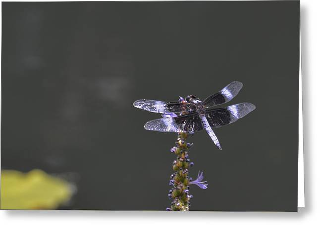 Dragon Fly Greeting Card by Linda Geiger