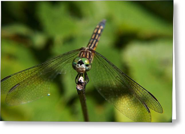Dragonfly Greeting Card by Belinda Cox