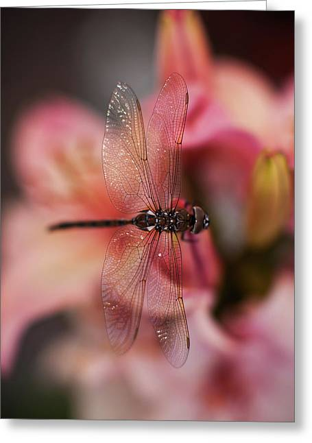 Dragonfly Serenity Greeting Card by Mike Reid