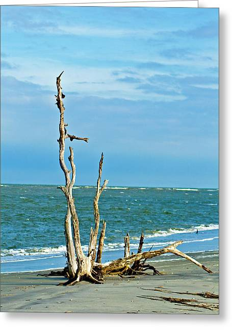Driftwood On Beach Greeting Card by Bill Barber