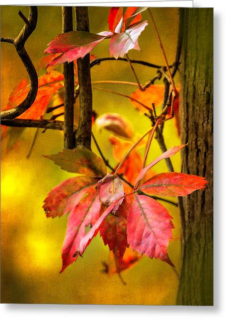 Greeting Card featuring the photograph Fall Colors by Eduard Moldoveanu