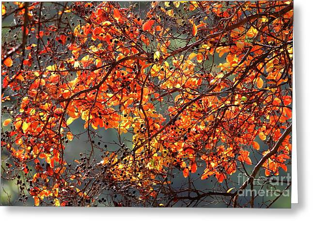 Greeting Card featuring the photograph Fall Leaves by Nicholas Burningham