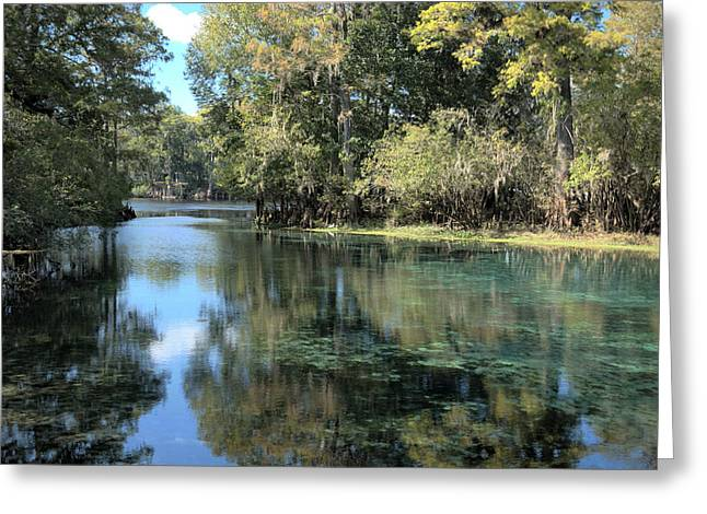 Frank Feliciano Greeting Cards - Fanning Spring out to The Swuanee River in HDR Greeting Card by Frank Feliciano