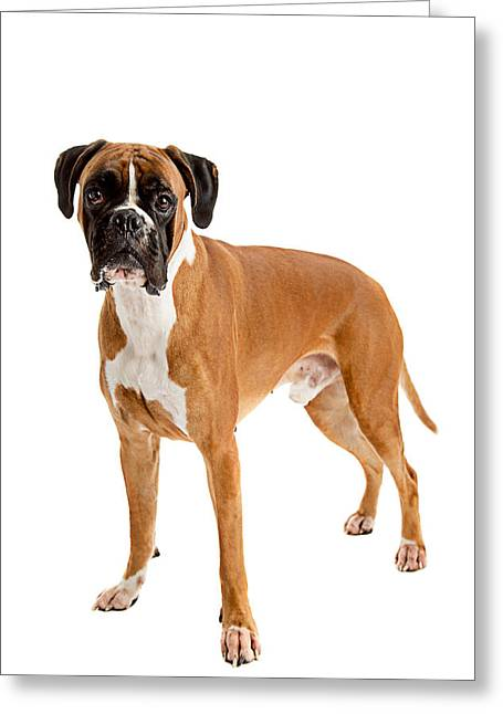 Fawn-colored Boxer Greeting Card