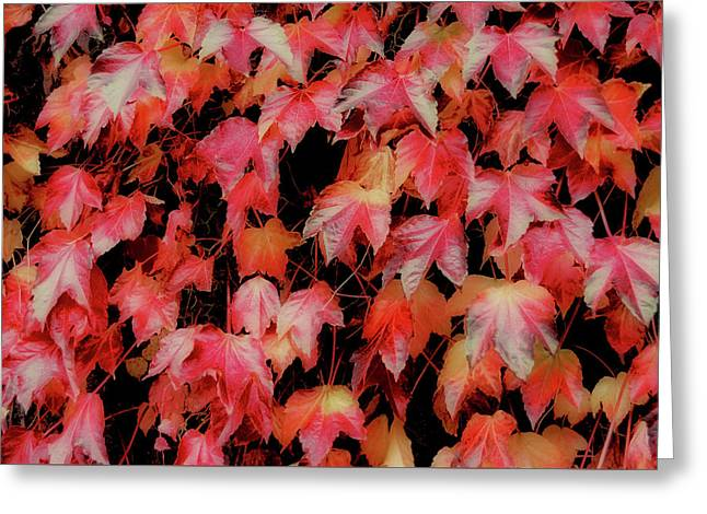 Fiery Foliage Greeting Card by JAMART Photography