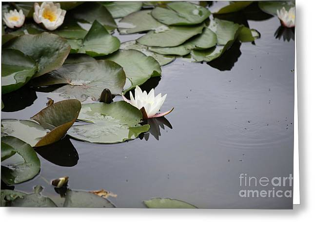 Fine Art Water Lily  Greeting Card