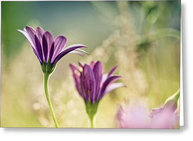 Flower On Summer Meadow Greeting Card