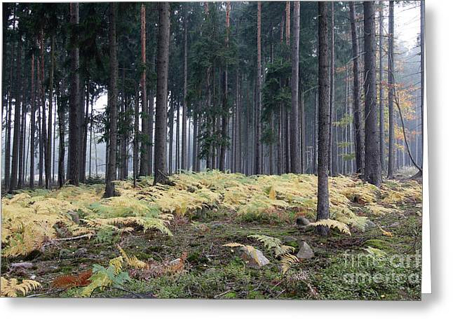 Fog In The Forest With Ferns Greeting Card by Michal Boubin