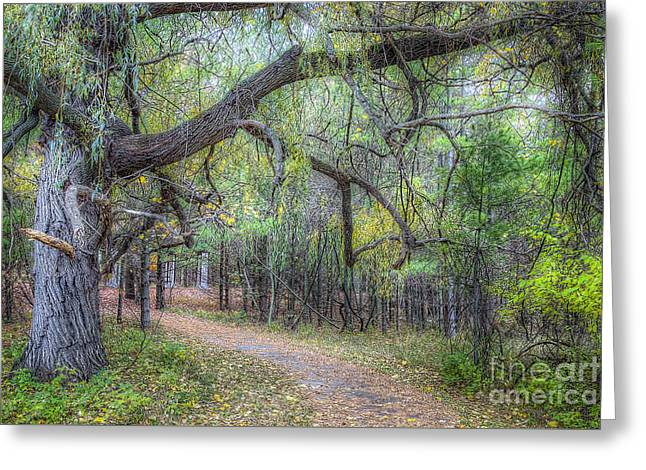 Forest In Sleeping Bear Dunes Greeting Card by Twenty Two North Photography