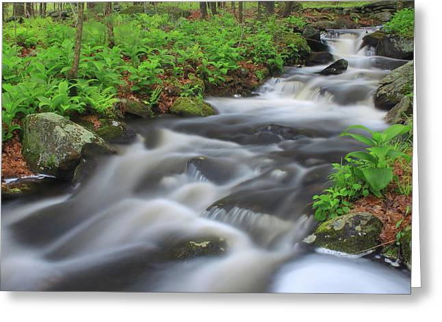 Forest Stream In Spring Greeting Card by John Burk
