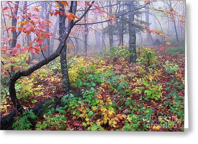 Forks Of Cranberry Trail Greeting Card by Thomas R Fletcher