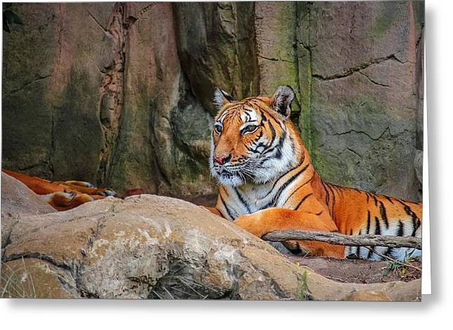 Fort Worth Zoo Tiger Greeting Card