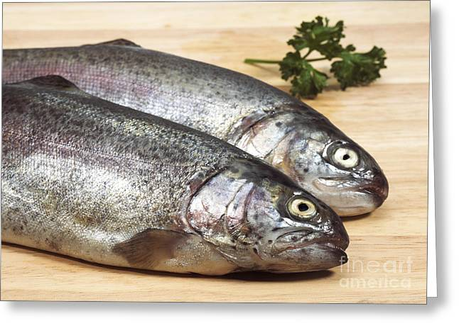Fresh Rainbow Trout Salmo Gairdneri Greeting Card