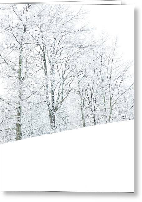 Allegheny Greeting Cards - Frosted Trees and Pasture Field Greeting Card by Thomas R Fletcher