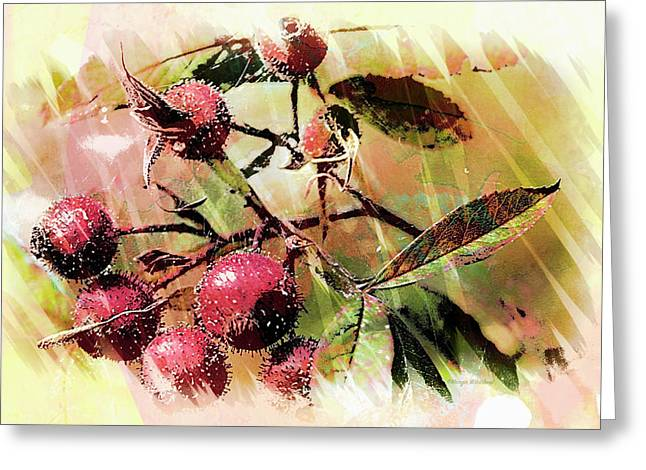 Fruit Of The Wild Rose Greeting Card by Margie Wildblood