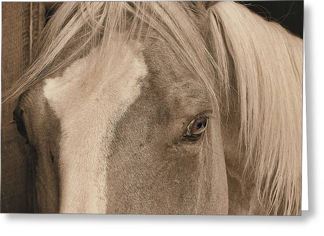 Golden Palomino Greeting Card by JAMART Photography
