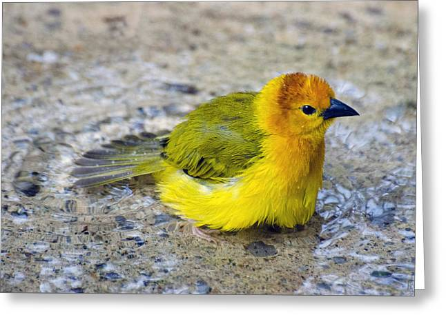 Golden Weaver Greeting Card by Cheryl Cencich