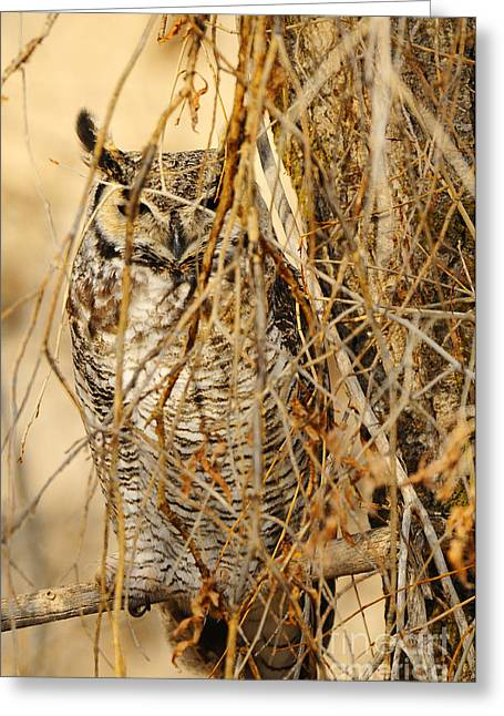 Great Horned Owl Greeting Card by Dennis Hammer