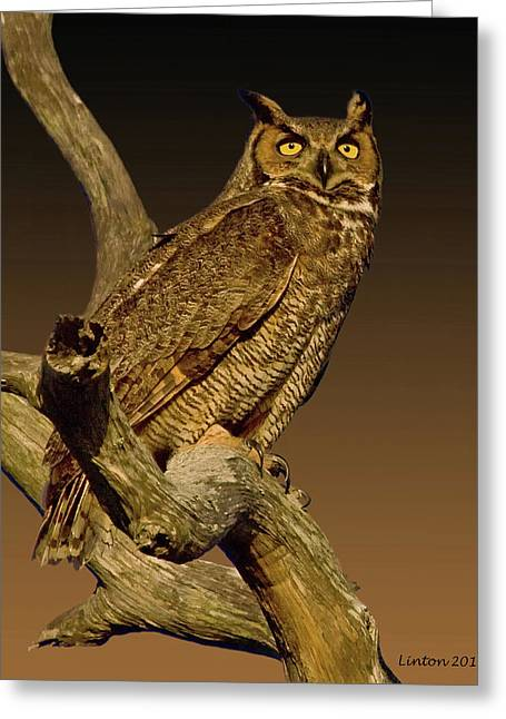 Great Horned Owl Greeting Card by Larry Linton