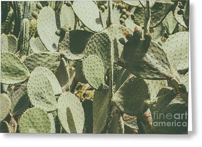 Green Cactus Fields In Summer Greeting Card by Radu Bercan