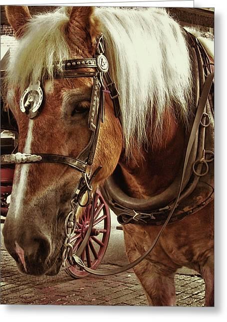 Haflinger Pony Greeting Card by Dressage Design