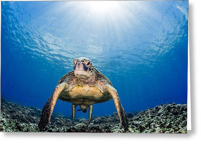 Hawaiian Turtle Greeting Card