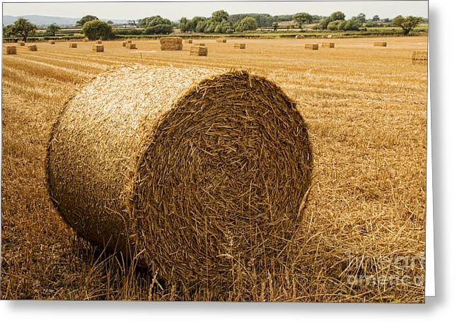 Hay Bales  Greeting Card by Chris Evans