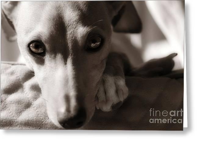 Heart You Italian Greyhound Greeting Card